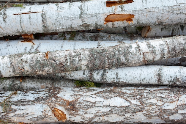 Des billots de pins et de bouleaux, empilés un tas