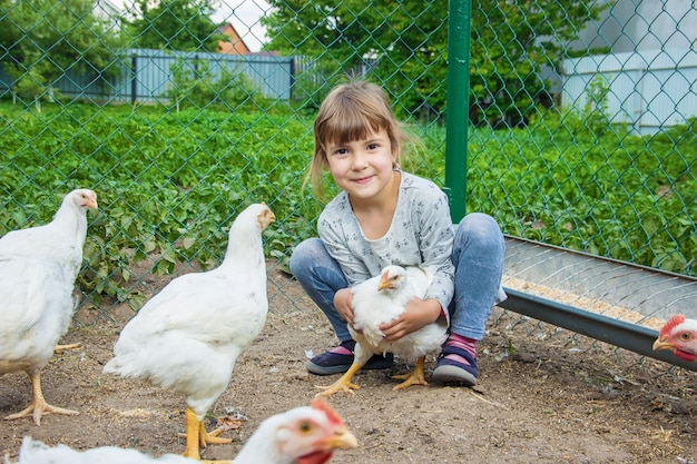 Bio poulets sur une ferme familiale un enfants.
