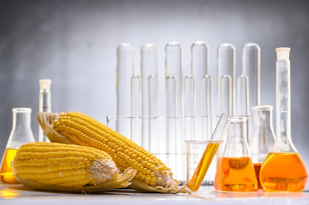 Biocarburant ou sirop de maïs, essence, énergie, environnementaliste