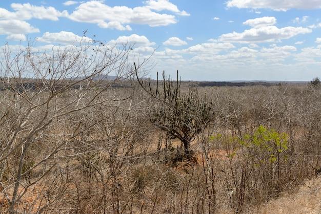 Biome brésilien caatinga monteiro paraiba brésil le 29 décembre 2020