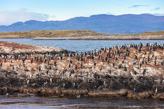 Bird island près d'ushuaia