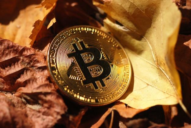 Bitcoin d'or sur les feuilles d'automne