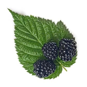Blackberry avec feuille verte isolée sur blanc