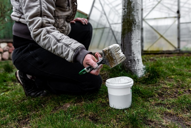 Blanchiment Des Arbres Fruitiers Au Printemps. Entretien Du Jardin. Photo Premium