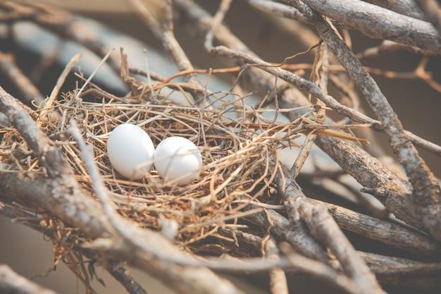 Blancs d'oeufs d'été dans le nid