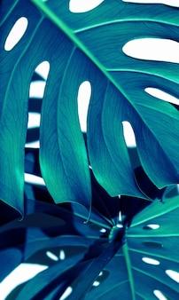 Bleu blanc indigo texture tropicale feuilles vertes beaux-arts naturels, monstera