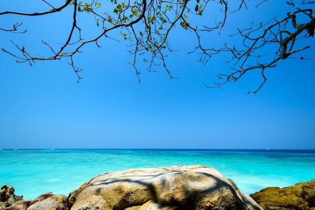 Bleu, mer, ciel, rocher, branche, arbre, île, tachai, thaïlande
