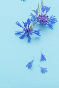 Bleuets bleus sur fond de papier bleu