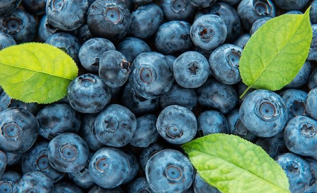 Bleuets fraîchement cueillis comme arrière-plan alimentaire naturel. concept pour une alimentation saine