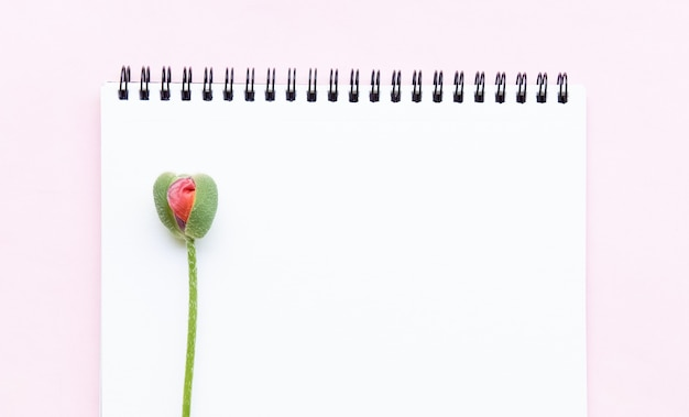 Bloc-notes pour notes et bourgeon d'une fleur de pavot semblable à un vagin d'organe féminin, bannière d'image