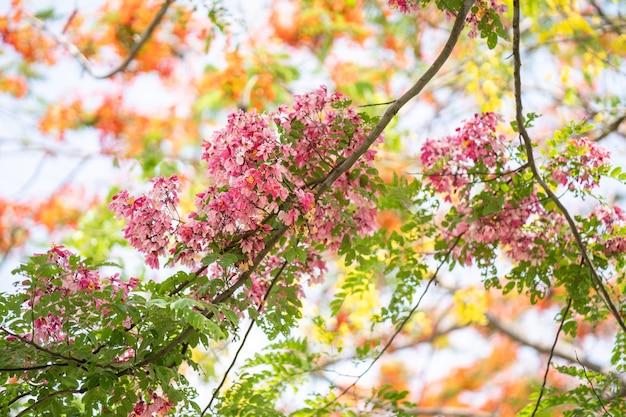 Blossom rainbow shower contre le ciel bleu