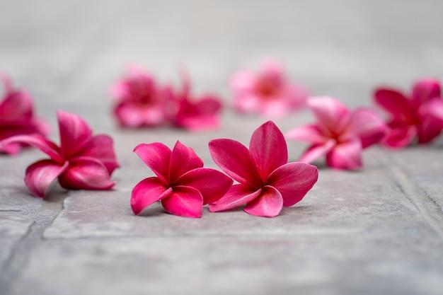 Blossom red plumeria ou fleurs de frangipanier au sol au jardin