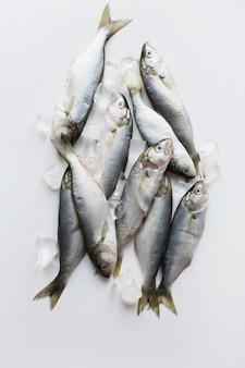 Bluefish frais de mer noire avec glaçon sur blanc