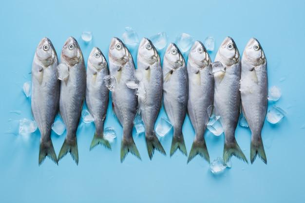 Bluefish de mer noire avec glaçon sur bleu pastel.