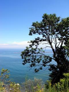 Bluffs milwaukee, arbre