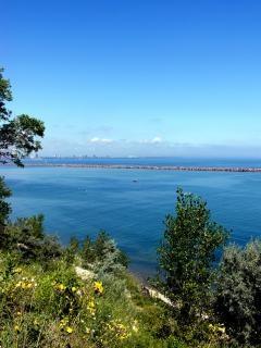 Bluffs milwaukee, lac, lakemichigan, arbre