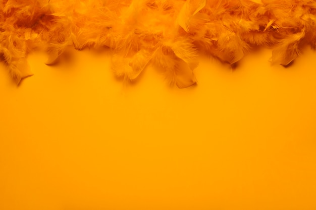 Boa de plumes orange avec espace copie