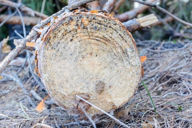 Bois abandonné après coupe. déforestation illégale. l'influence de l'homme sur l'environnement. problèmes environnementaux. le réchauffement climatique. changement de climat.