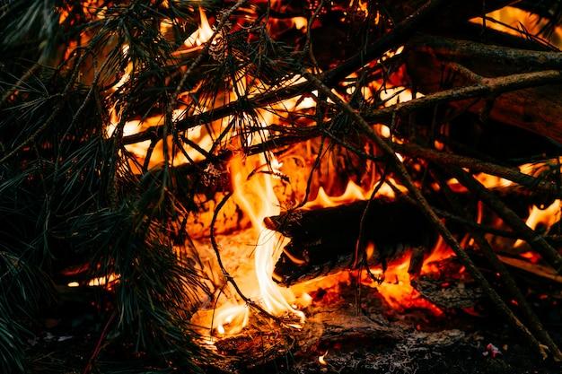 Le bois brûle dans la nature