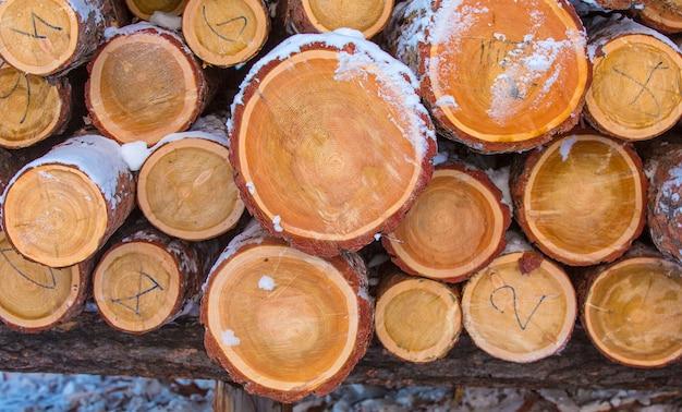Bois de chauffage empilé dans le bois coupé, bois
