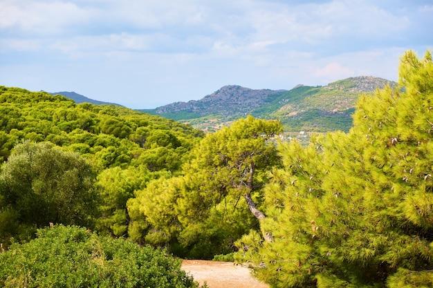 Bois de conifères dans l'île d'egine près d'agia marina, grèce. paysage de campagne grecque