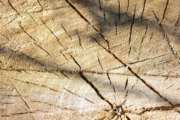 Bois coupé avec fond de vieux bois fissuré
