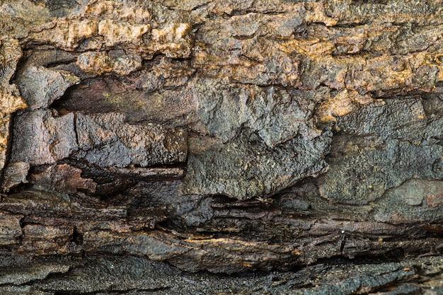 Bois d'écorce texturé humide