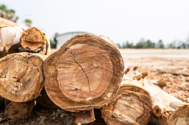 Bois d'eucalyptus disposé en couches, tas de grumes de bois d'eucalyptus prêts pour l'industrie.