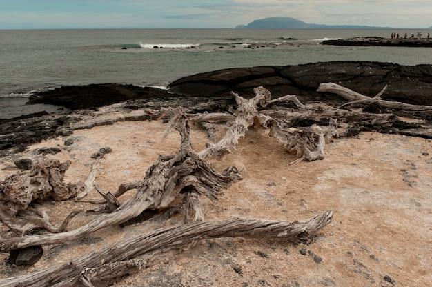 Bois flotté sur la côte, punta espinoza, île fernandina, îles galapagos, équateur
