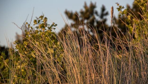Bois hollandais au coucher du soleil