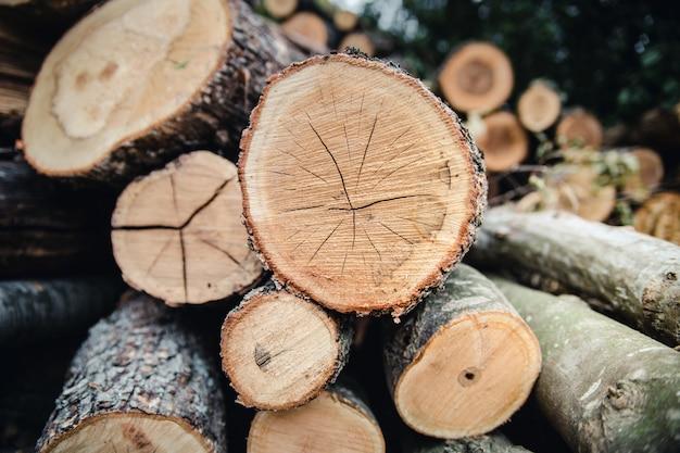 Le bois récolté en hiver. gros plan des journaux.