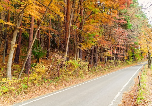 Bois verts de chêne automne ensoleillé