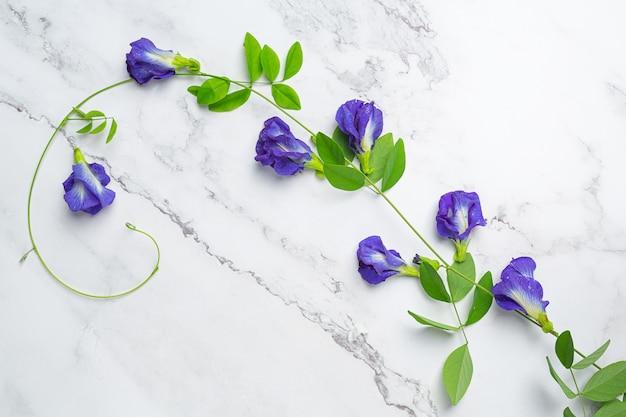 Boisson saine, thé aux fleurs de pois bleu bio au citron et citron vert.
