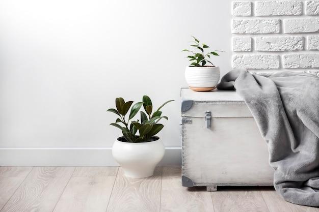 Boîte en bois blanche et jeunes plantes d'intérieur dans des pots de fleurs blanches sur fond de mur blanc. espace de copie