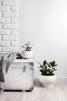 Boîte en bois blanche et jeunes plantes d'intérieur dans des pots de fleurs blanches sur une surface murale blanche