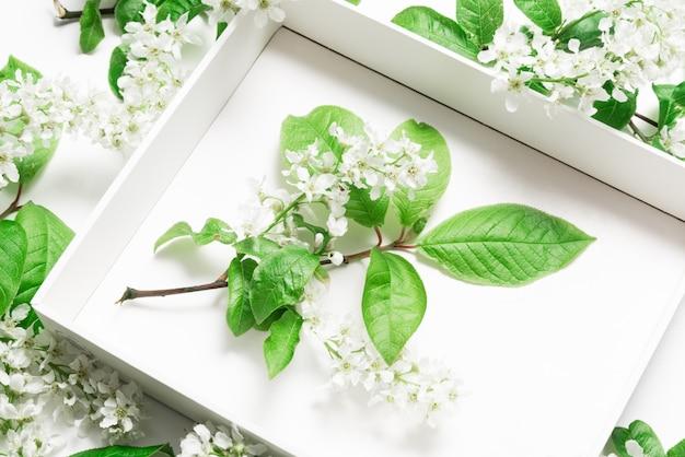 Boîte en carton blanc vue de dessus en cerisier des oiseaux