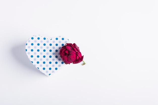 Boîte en carton bleu à pois à côté de rose avec des pétales presque secs