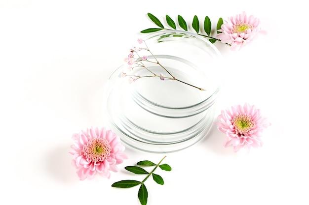 Boîte de pétri avec des fleurs. fond botanique de laboratoire. développement clinique en laboratoire, ingrédients naturels.