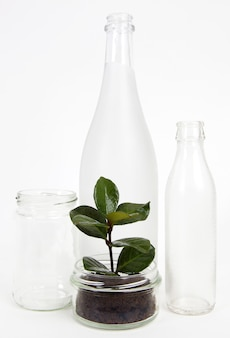 Boîtes de conserve et bouteilles en verre avec semis