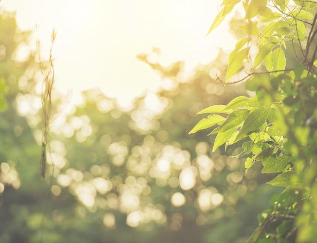 Bokeh abstrait flou de couleur verte pour le fond