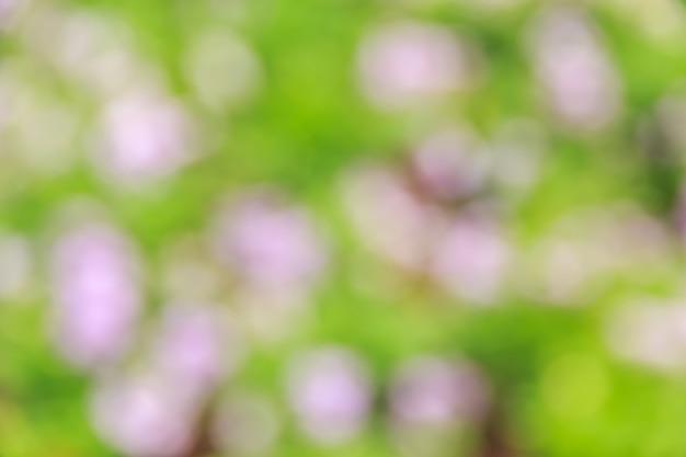 Bokeh abstrait et fond de nature verte floue