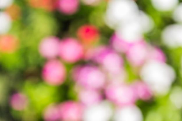 Bokeh beaucoup coloré dans les jardins
