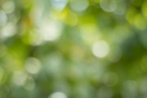 Bokeh des feuilles des arbres pour la nature fond et enregistrer le concept vert