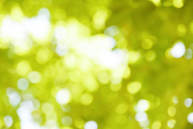 Bokeh flou fond branche arbre feuille verte sur la lumière du soleil du ciel