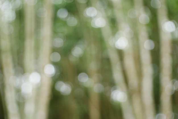 Bokeh fond, arbre de noël bokeh vert clair