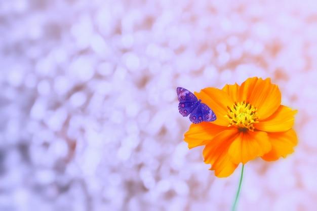 Bokeh léger argenté avec fleur cosmos jaune et papillon