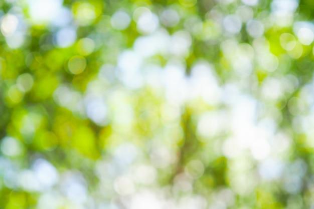 Bokeh vert de l'arbre laisse la nature hors de la mise au point