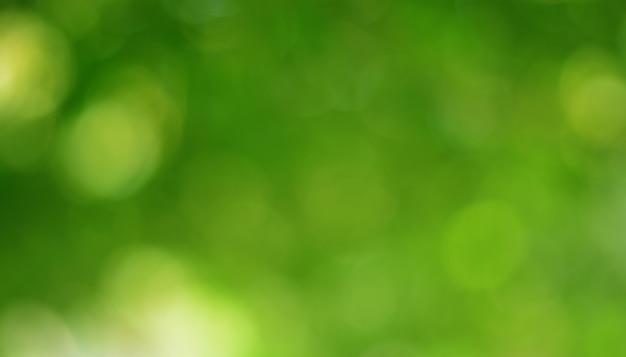 Bokeh vert sur la nature abstrait flou fond vert bokeh d'arbre