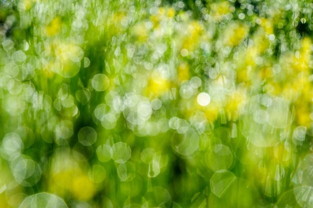 Bokeh vert nature rafraîchissante