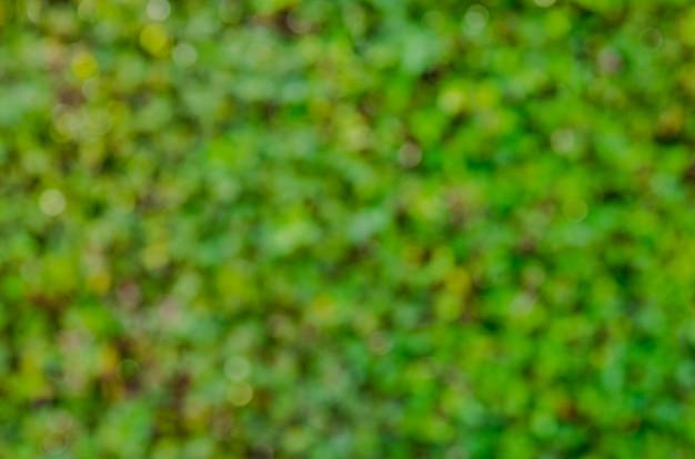 Bokeh vert nature